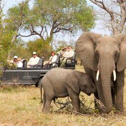 Zuid-Afrika-Sabi-Sands-Dulini-Leadwood-Lodge-game-drive
