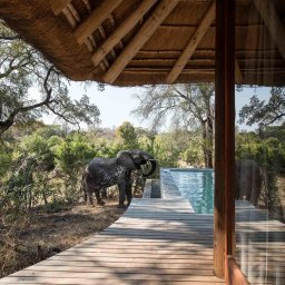Zuid-Afrika-Sabi-Sands-Dulini-Leadwood-Lodge-olifant