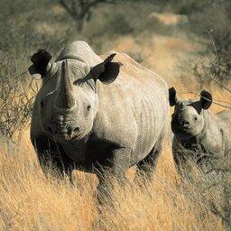 Zuid-Afrika-Tswalu-Kalahari-streek-wetu-3
