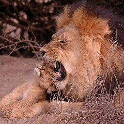Zuid-Afrika-Tswalu-Kalahari-streek-wetu-5