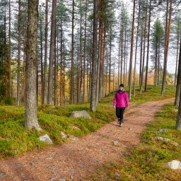Zweden-Lapland-Arctic-Retreat-zomer-hiken