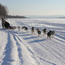 Zweden-Lapland-Harads-treehotel-johan-jansson-huskyJPG