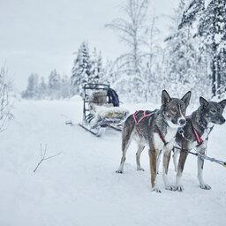 Zweden-Lapland-Harads-treehotel-johan-jansson-huskyslee