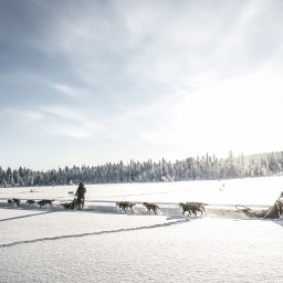 Zweden-Lapland-Kiruna-Fjellborg-Arctic-Lodge-huskysafari